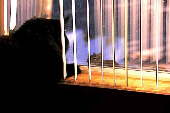 Fotos-de-gatinhos-na-janela-imagens