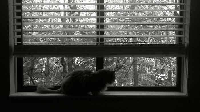 Fotos-de-gatinhos-na-janela-lindo