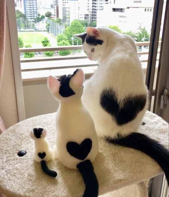 Gatinha-com-manchaemformato-de-coração-nas-costas