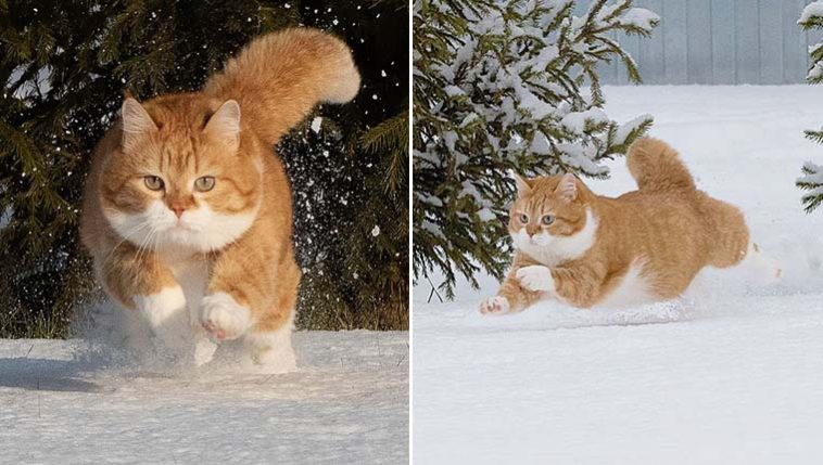 Gatinho redondo neve