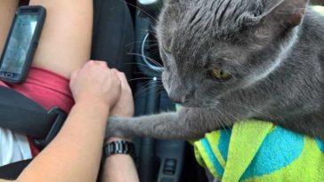 Gatinho segura as mãos dos donos