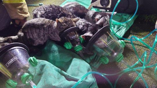 Gatinhos precisam de máscaras de oxigênio
