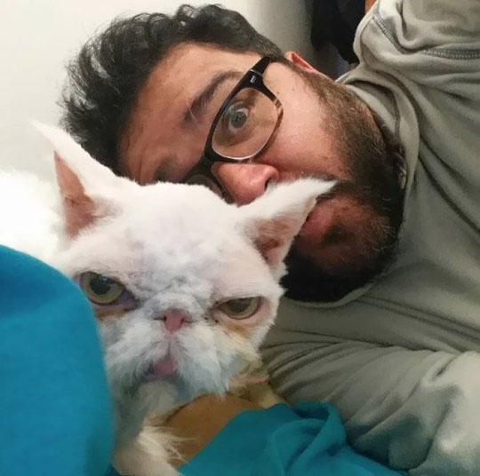 Gato persa passou por tosa resgatado