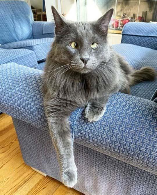 Gato vesgo encantador foto