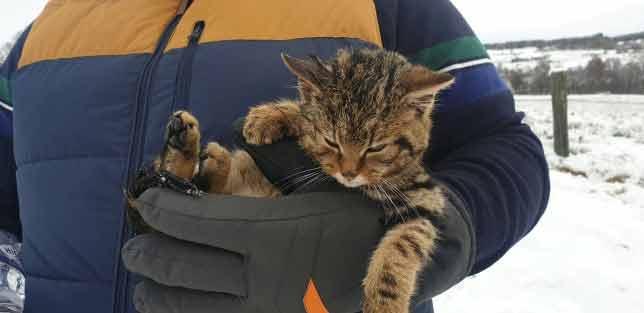 Homens-resgataram-filhote-gatinho