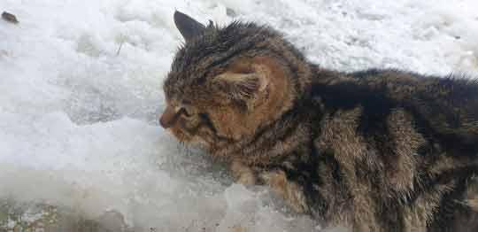 Homens-resgataram-filhote-perdido-na-neve