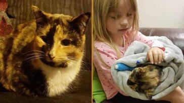 Mãe registra a filha se despedindo de gatinha que foi envenenada