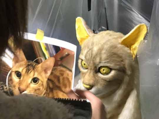 Máscaras-para-donos-de-gatinhos