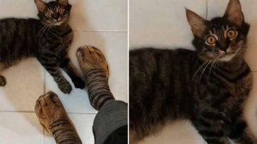 Meias-parecidas-com-patas-de-gatinho