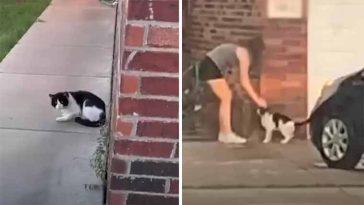Mulher-flagra-vizinhos-abandonandoo-gatinho