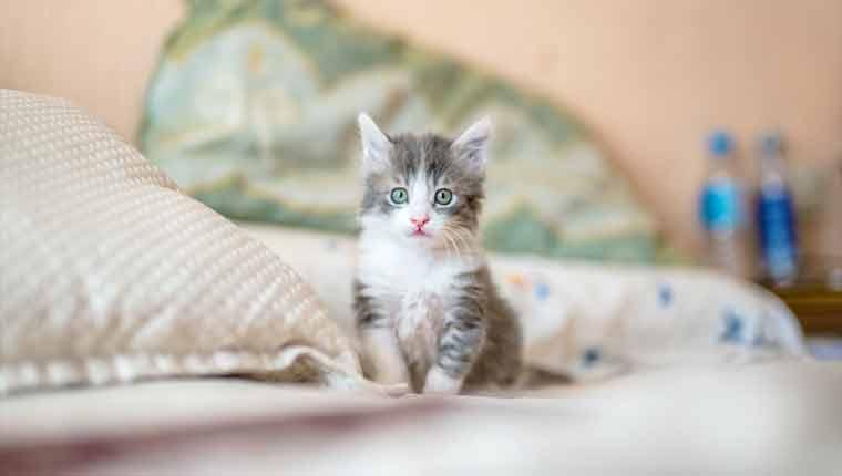 Nomes-de-gato-mais-populares-ano