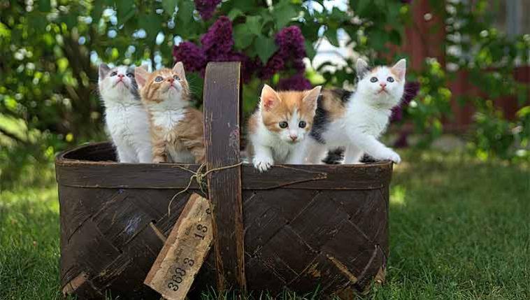 Nomes-de-gato-mais-populares-em-2020
