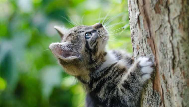 Nomes-de-gato-mais-populares