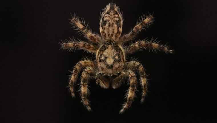 O-que-atrai-as-aranhas
