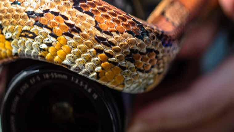 O-que-é-sonhar-com-várias-cobras