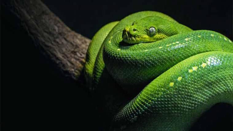 Significados dos sonhos com cobras