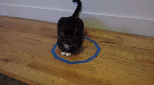 Por que os gatos ficam em círculos Entenda esse costume divertido