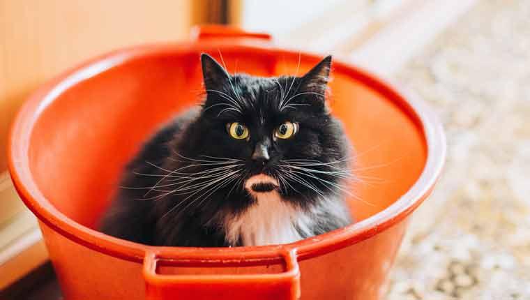 Por-que-os-gatos-odeiam-água-ciência