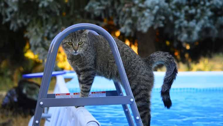 Por-que-os-gatos-odeiam-água-explicação