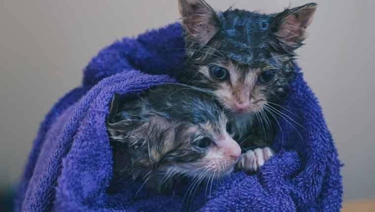 Por-que-os-gatos-odeiam-água-foto