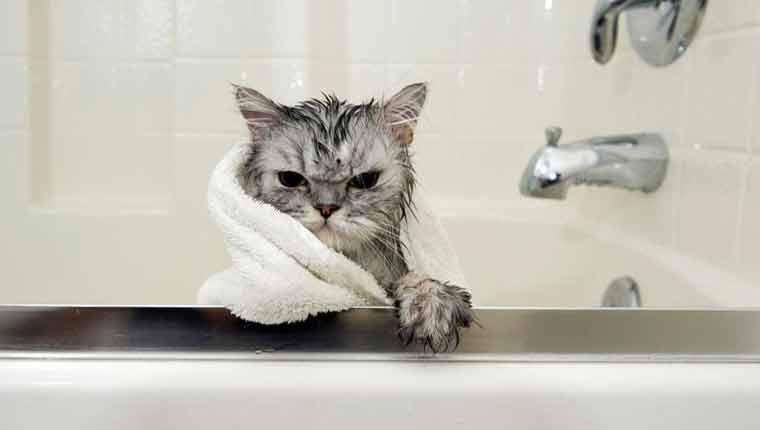 Por-que-os-gatos-odeiam-água-fotos