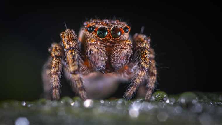 Quais-são-as-principais-características-das-aranhas
