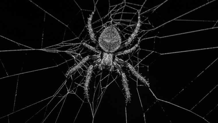 Qual-é-a-maior-aranha-do-mundo-curiosidades-sobre-aranhas