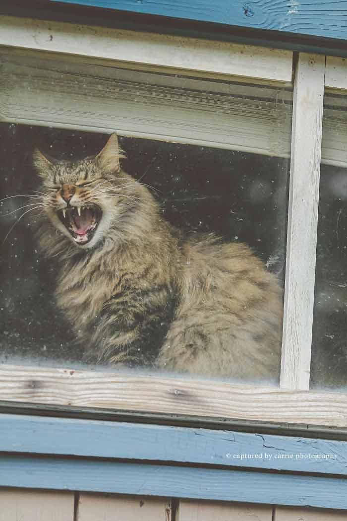 Veja-fotos-de-gatinhos-na-janela