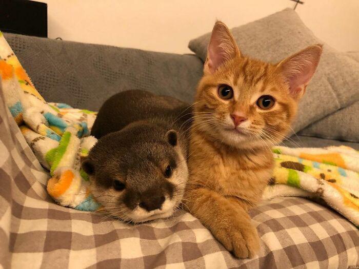 amizade entre animais diferentes