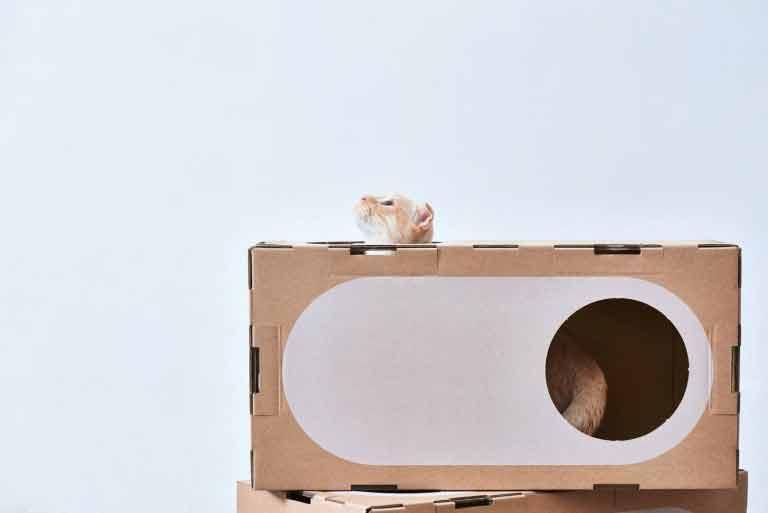 brinquedos-de-papelão-para-gatos