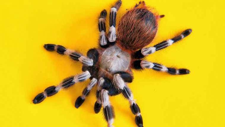 curiosidades-sobre-aranhas