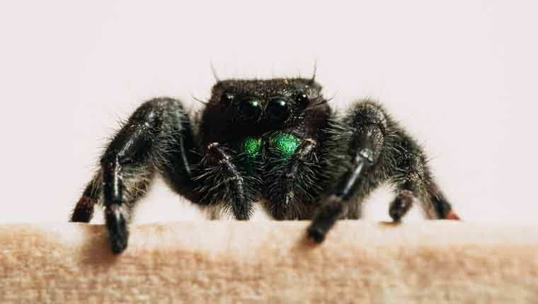 curiosidades-sobre-aranhas-fotos