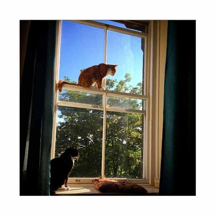 curiosidades-sobre-gatos