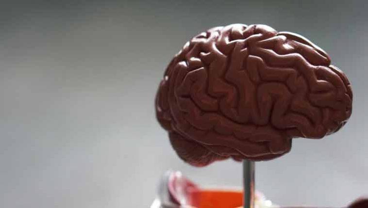curiosidades-sobre-o-cérebro