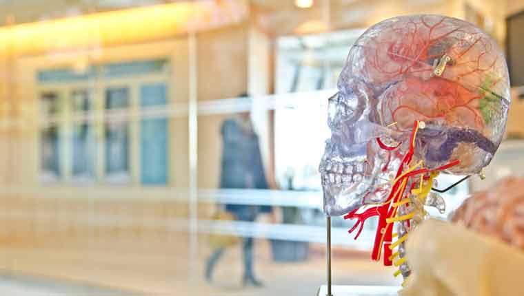 curiosidades-sobre-o-cérebro-fato