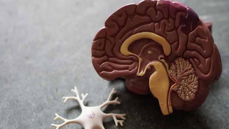 curiosidades-sobre-o-cérebro-melhores