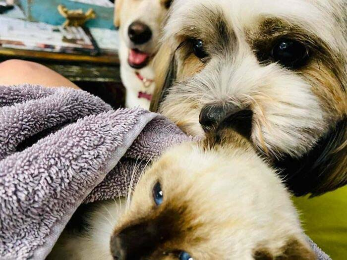 gatinha resgatada amizade cachorros