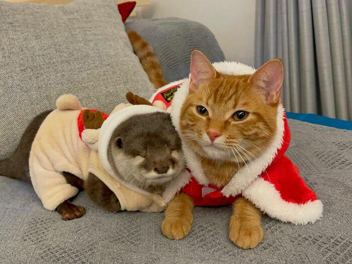 gatinho e lontra