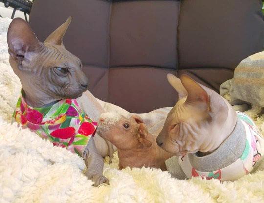 gatinhos e porquinhos