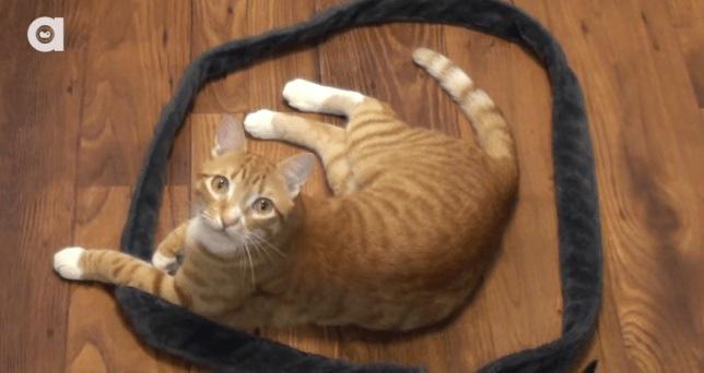 gatinhos em círculos