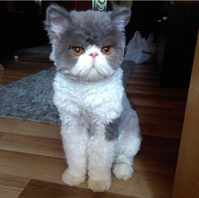 gato apos tosa