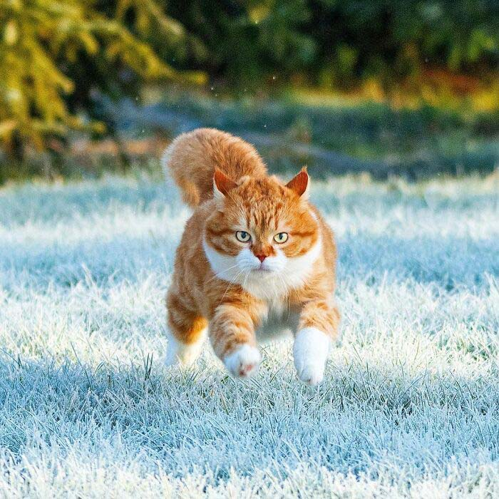 gato e neve