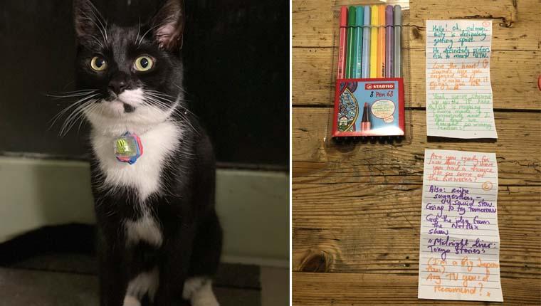 gato entregador de cartas
