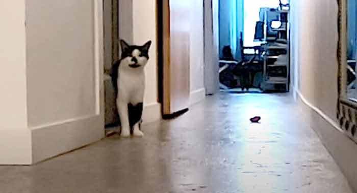 gato-sozinho-em-casa