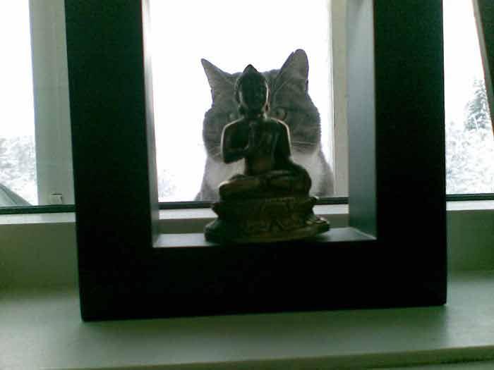 gatos-fotos-veja