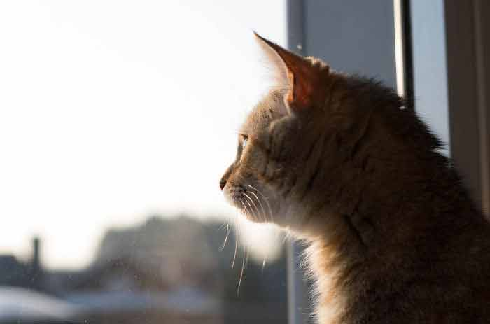 gatos-imagens