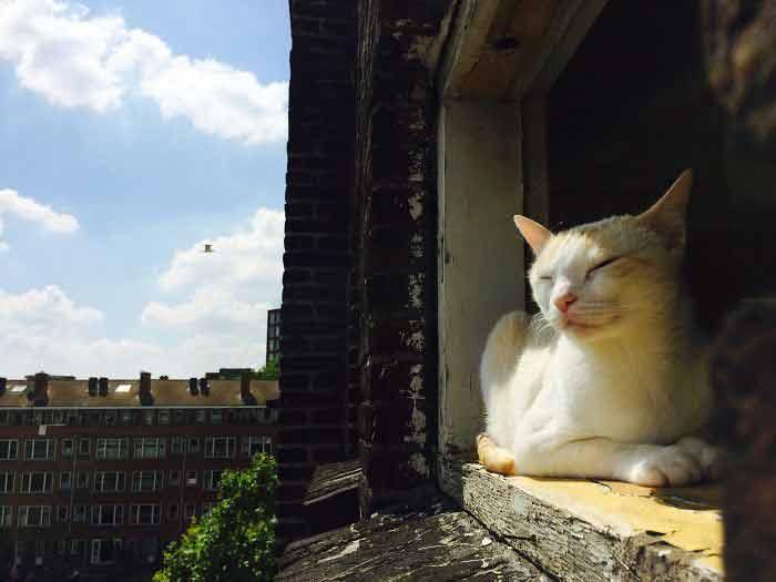 gatos-olhando-na-janela