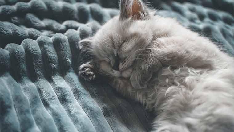 gatos-sonham-como-humanos