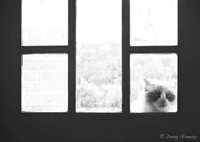 imagens-de-gatinhos