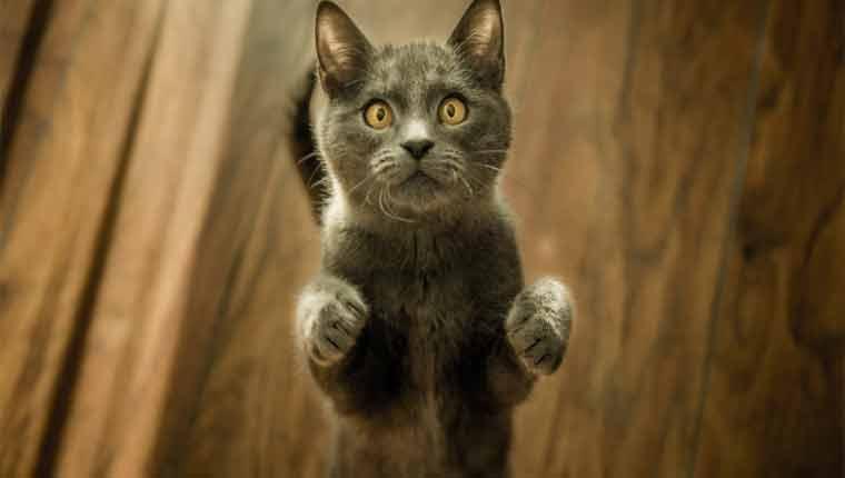 nomes-de-gatinhos